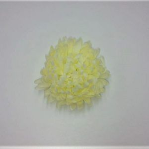 Krüsanteemi-õis-K045-2