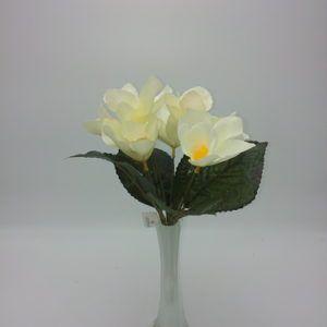 Orhidee-kimp