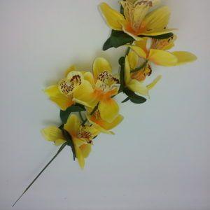 Orhidee-oks-0750-6