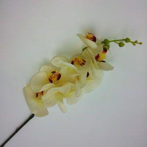 Orhidee-oks-3000-1